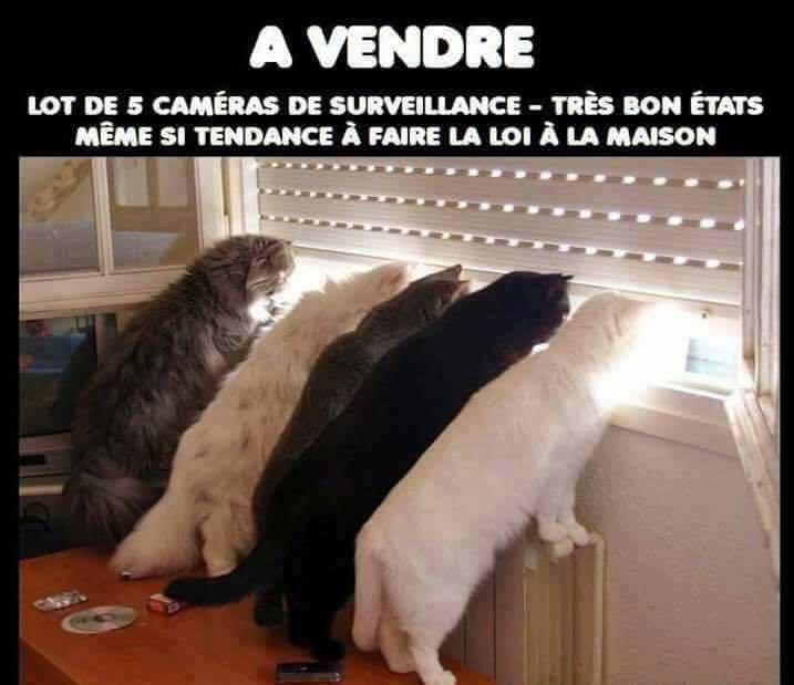 Images Drôles - Nos amis les chats, ils sont très utiles ;)
