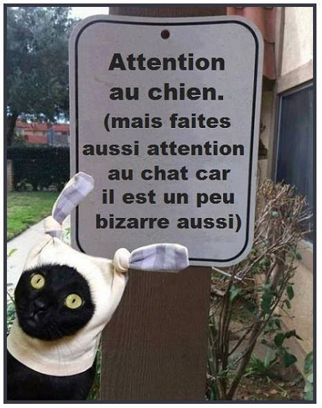 Image rigolote  ATTENTION , photo blague